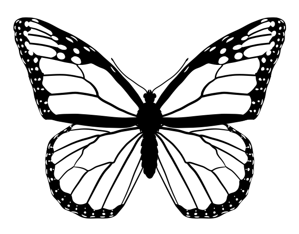 600x469 Drawingbutterfly 4 5 Monarch Etching Patterns And Etched Jewelry