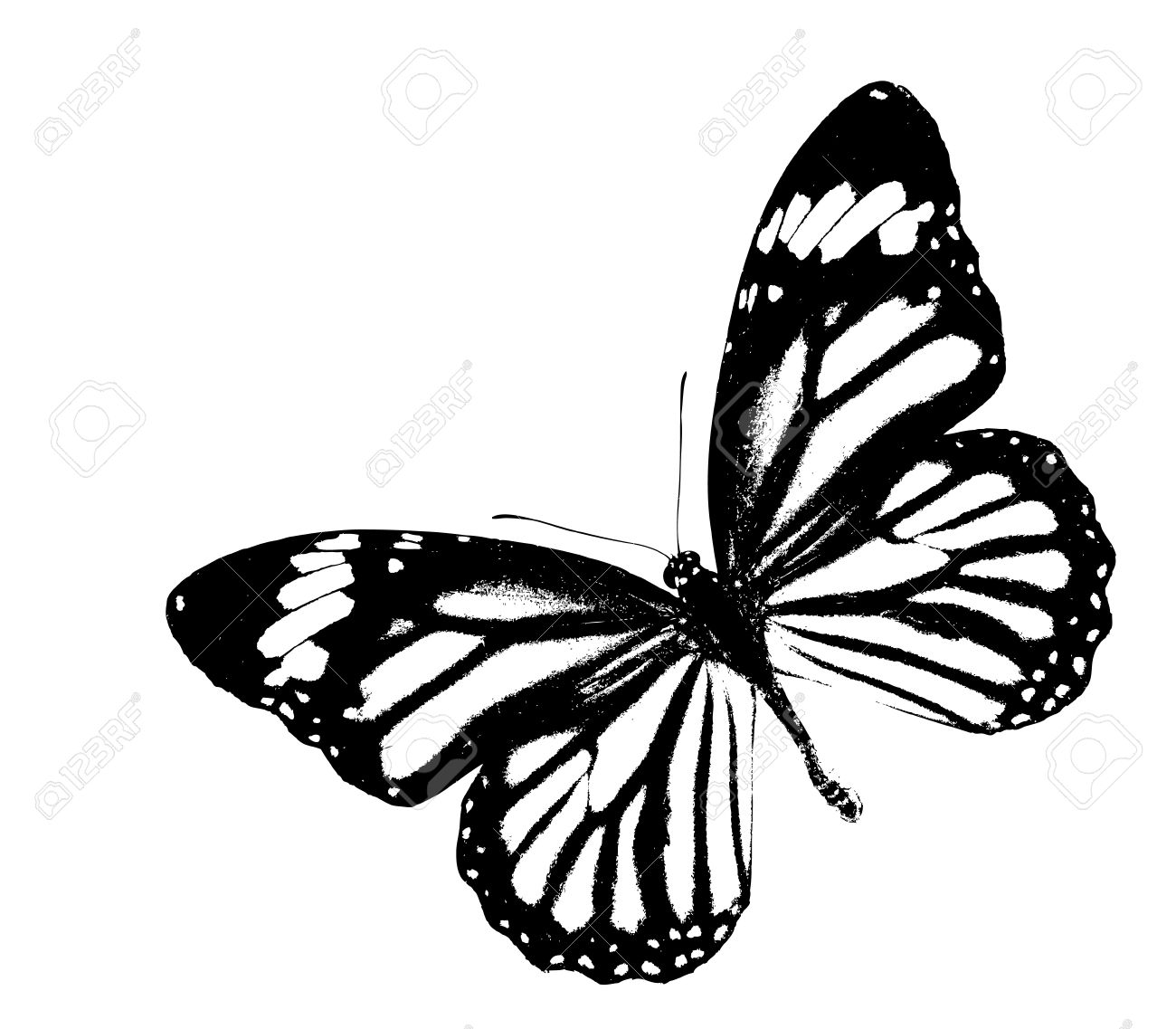 1300x1137 Black And White Monarch Butterfly Flying On Isolated White Stock