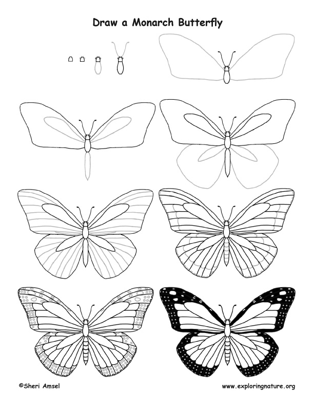 612x792 Butterfly (Monarch) Drawing Lesson