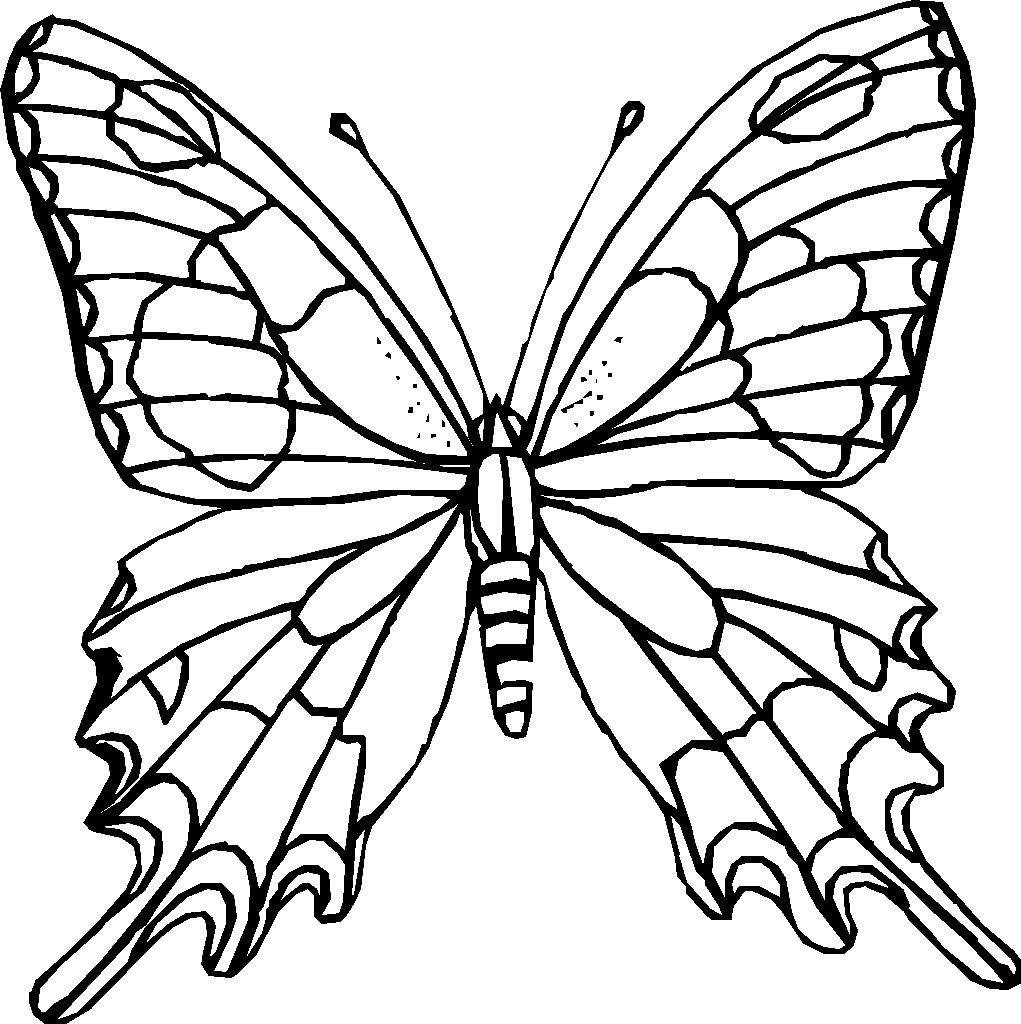 1021x1024 Butterfly Black And White Coloring Page Butterfly Drawings Black