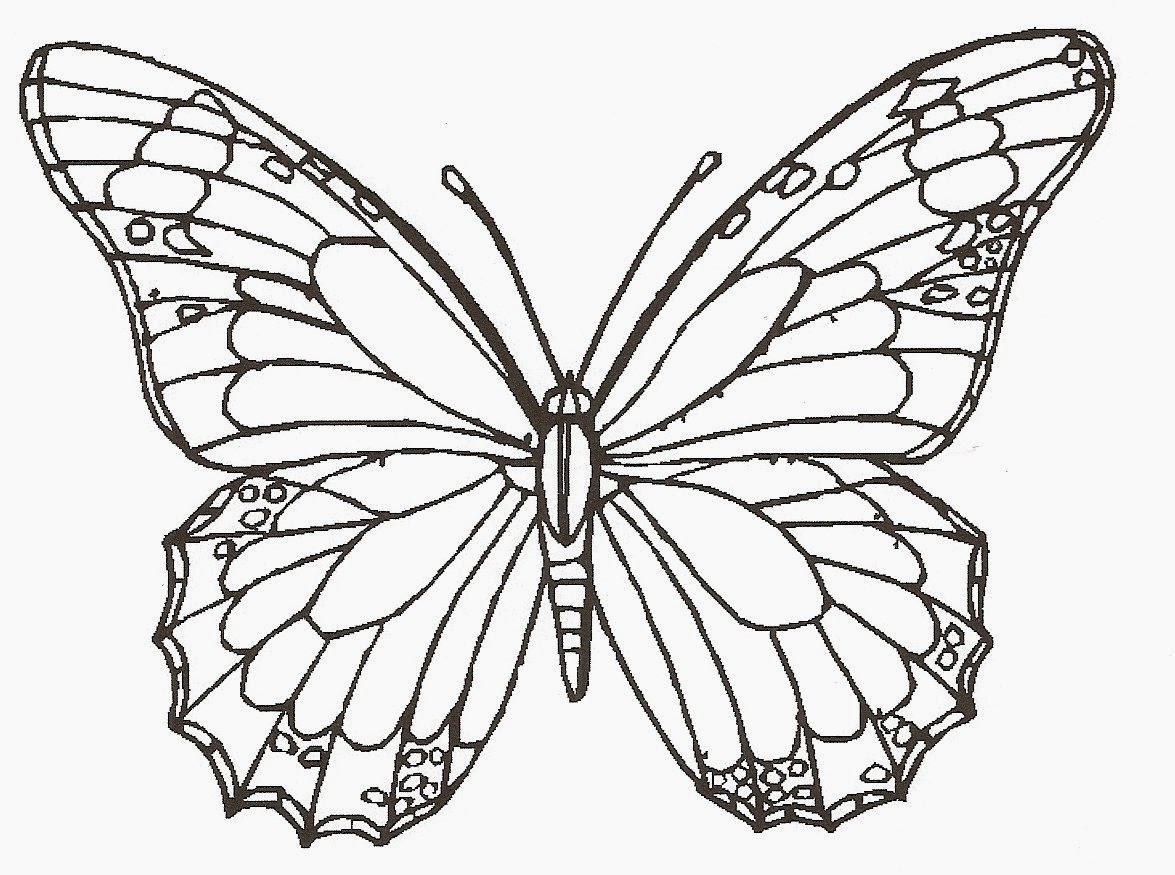 1175x875 Butterfly Hd Sketch Drawing Butterfly Monarch 2d How To Sketch