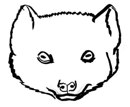 424x350 How To Draw Mongoose`s Head And Face