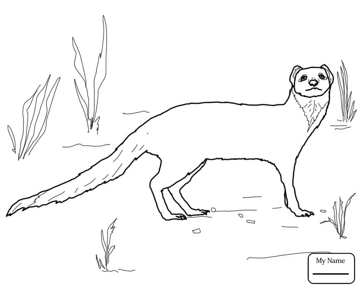 1224x979 Jumping Mongoose Mammals Coloring Pages