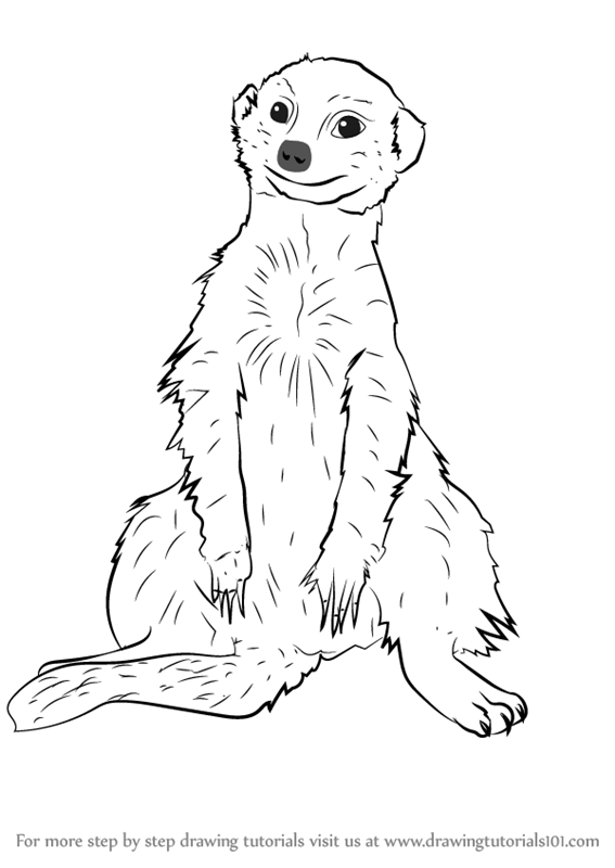 567x800 Learn How To Draw A Meerkat Sitting (Wild Animals) Step By Step