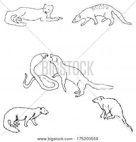 450x470 Mongoose. Sketch By Hand. Pencil Vector Amp Photo Bigstock
