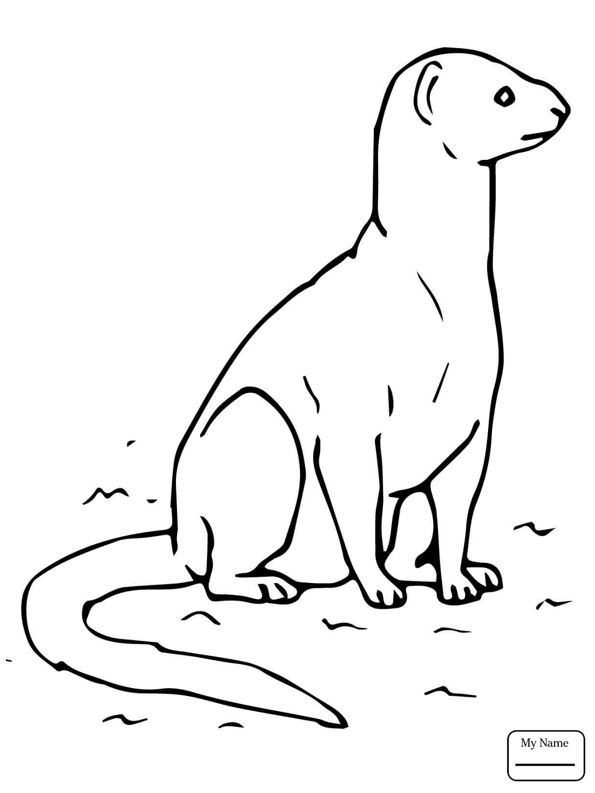 1224x1632 Coloring Pages Yellow Mongoose Mammals