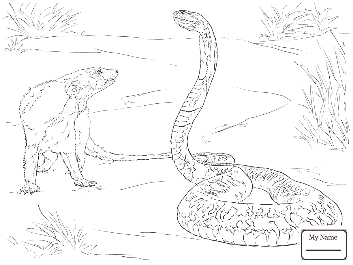 1224x918 Coloring Pages For Kids Cobra Is Thirsty Cobra Reptiles