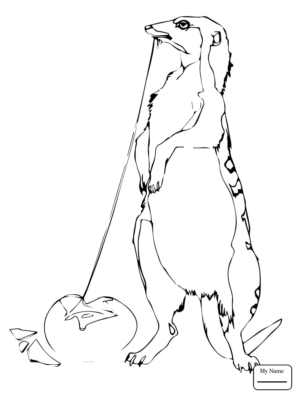 1224x1632 Coloring Pages For Kids Cobra Vs Mongoose Mongooses Mammals