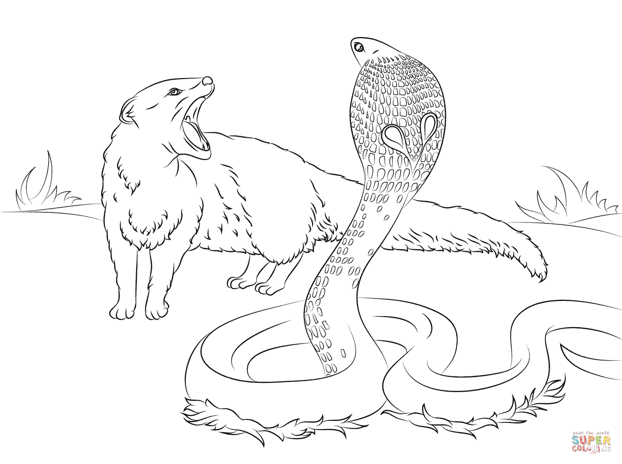 1228x916 Cobra Vs Mongoose Coloring Page Free Printable Coloring Pages