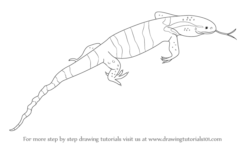 800x476 Learn How To Draw A Monitor Lizard (Reptiles) Step By Step