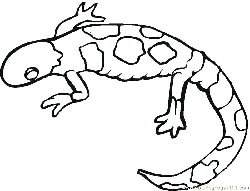 800x612 Lizard Coloring Pages 6 Pics Of Basilisk Lizard Coloring Pages