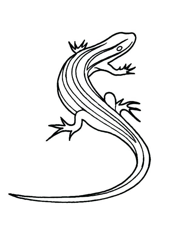 Monitor Lizard Drawing at GetDrawings | Free download