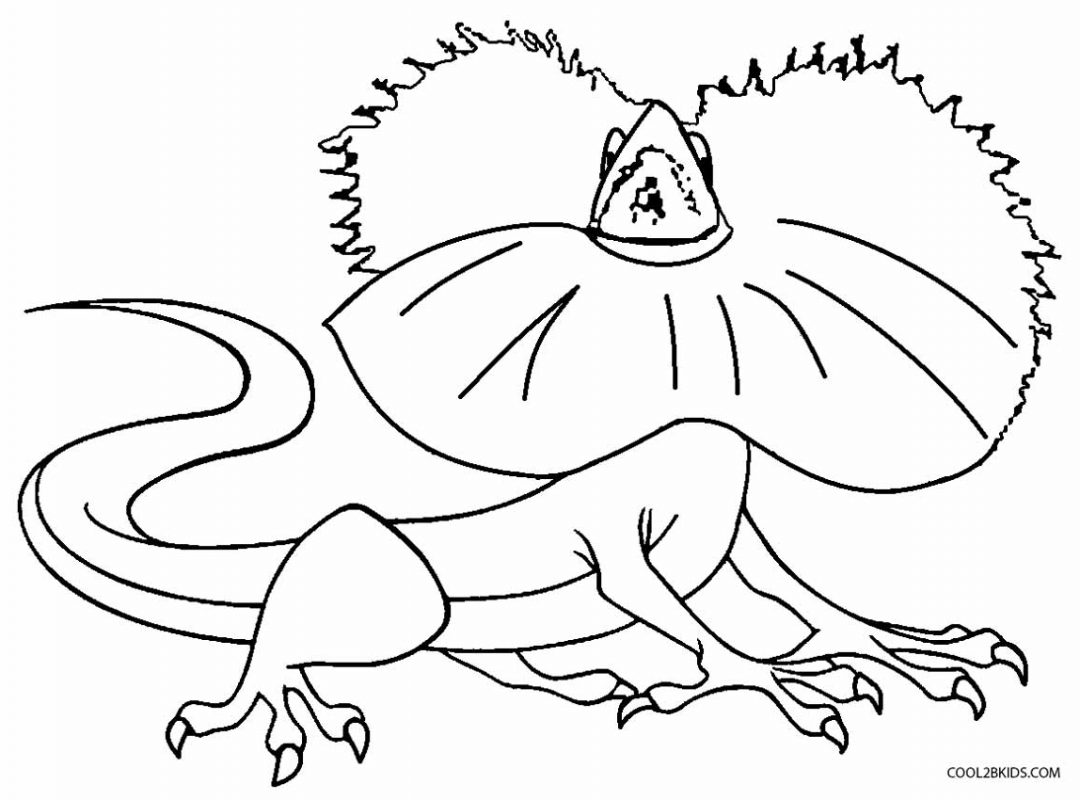 1080x800 Lizard Coloring Pages For Toodler To Download Animals Page