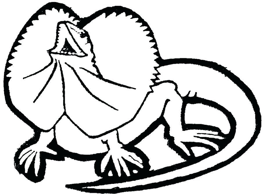 940x670 Lizard Coloring Pages Giant Salamander Lizard Coloring Pages