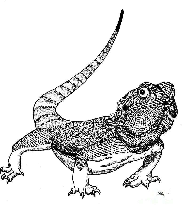 775x900 View Gallery With 37 Bearded Dragon Drawing Images Dragon Barbu