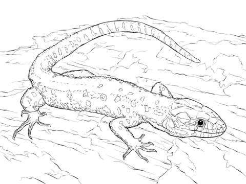 480x360 Yellow Spotted Tropical Night Lizard Coloring Page Free
