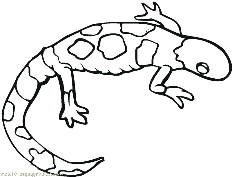 800x612 Lizard Coloring Pages Interconnect.site