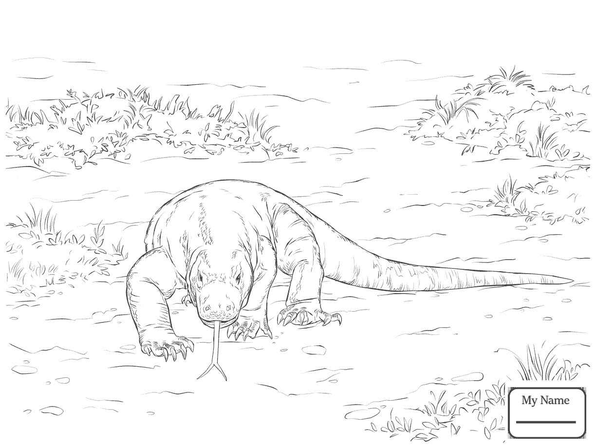 1224x918 Monitor Lizard Komodo Reptiles Coloring Pages