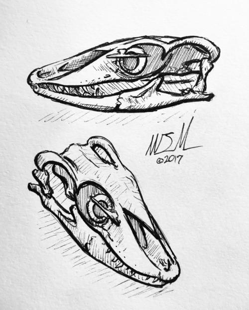 500x624 Monitor Lizard Skull Tumblr