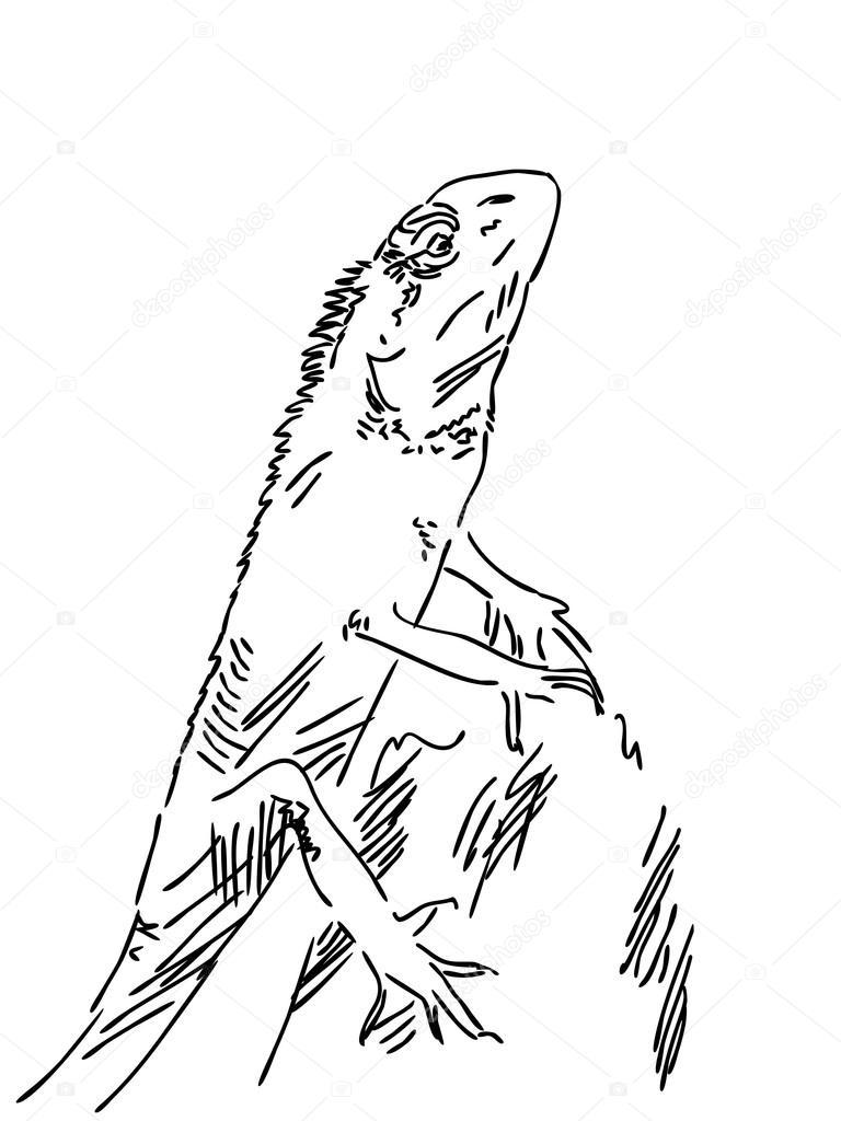 768x1024 Hand Drawn Lizard Stock Vector Olgatropinina