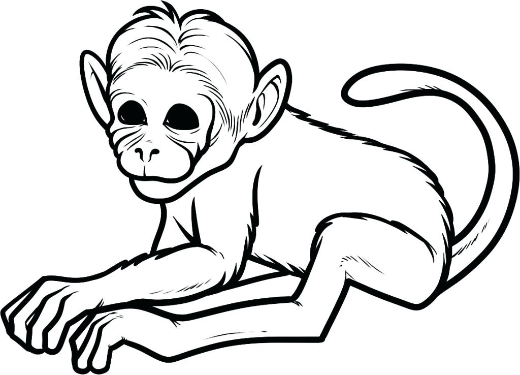 1024x738 Best Free Printable Monkey Coloring Pages Online For Kids