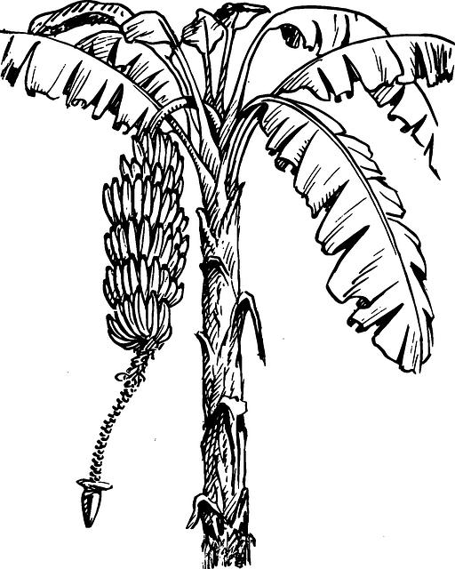 512x640 Monkey, Black, Food, Fruit, Outline, Drawing, Sketch