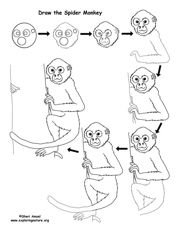 612x792 Monkey Drawing Lesson