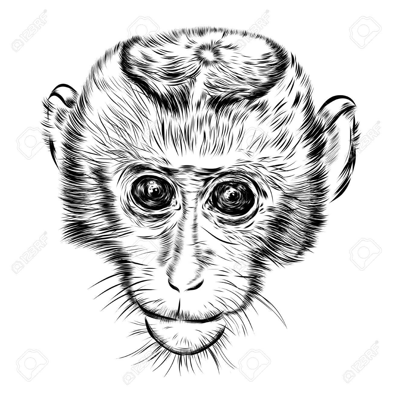1300x1300 Sketch Monkey Face. Hand Drawn Of A Doodle Illustration. Stock