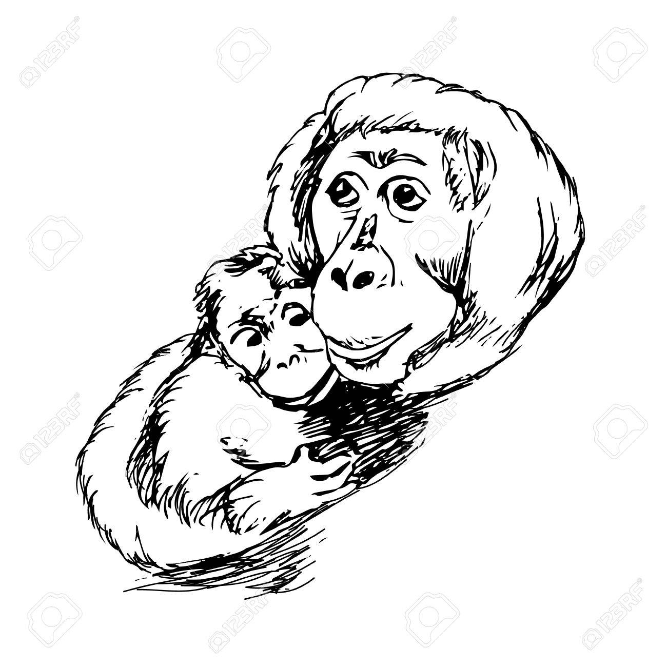 1300x1300 The Graphic Image Of The Monkey, Monkey Head, The Face. Drawing By