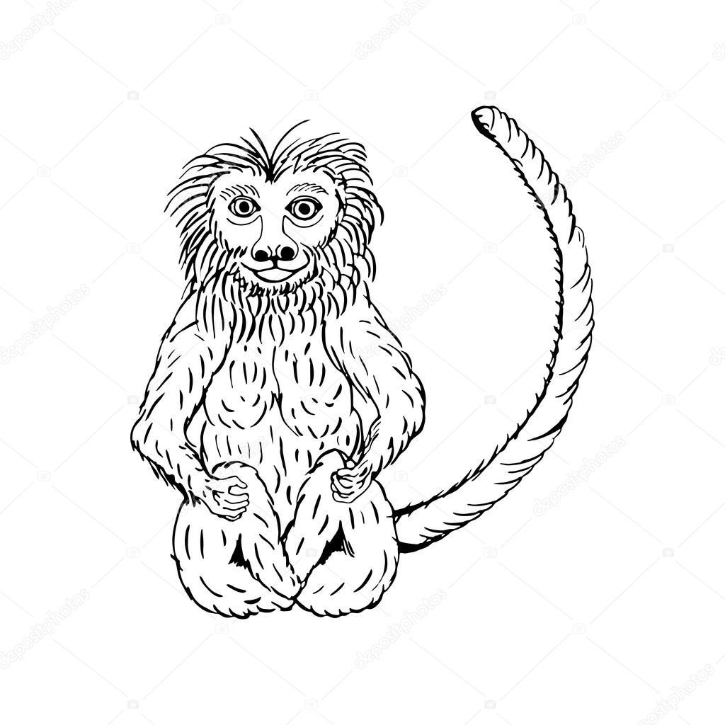 1024x1024 Hand Draw A Monkey Stock Vector Gennadiikorchuganov