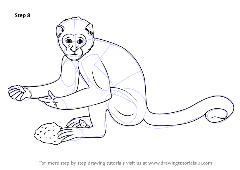 842x596 Learn How To Draw A Monkey (Zoo Animals) Step By Step Drawing