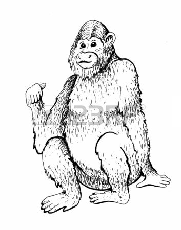 353x450 Monkey Sketch Engraving Stock Photo, Picture And Royalty Free