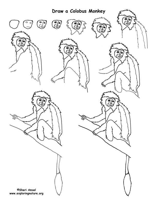 612x792 Colobus Monkey Drawing Lesson