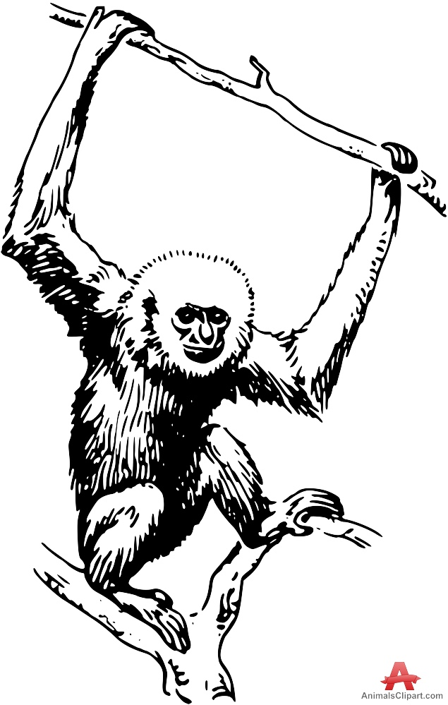 635x999 Monkey Hanging On Tree Drawing Free Clipart Design Download