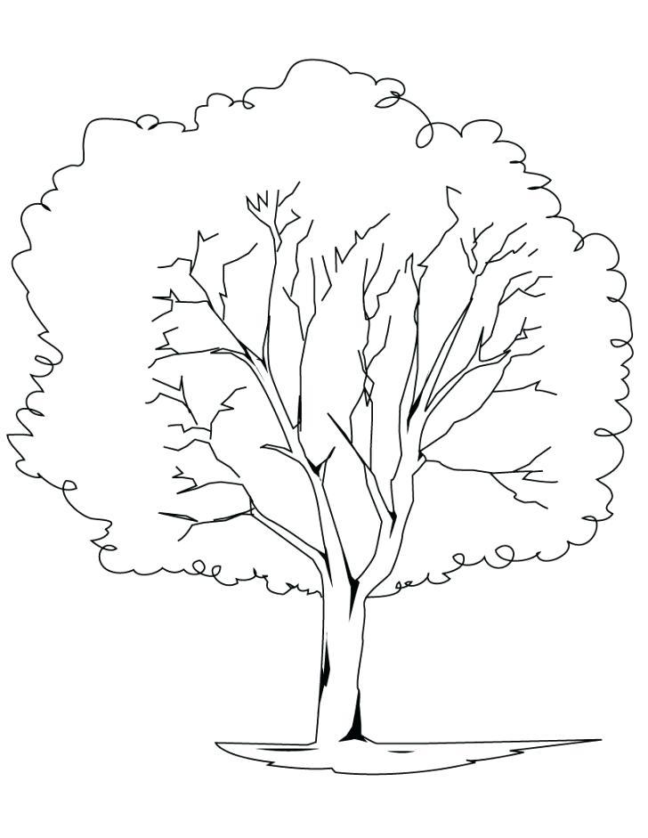 728x941 Palm Tree Beach Coloring Pages Adult For Kids Printable Great