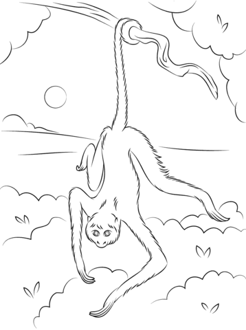 358x480 Spider Monkey Hanging On Tree Coloring Page Free Printable