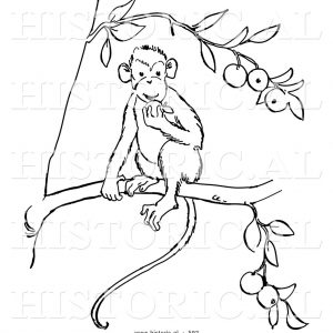 300x300 Monkey Pic Drawing On Share Online Monkey Historical Vector