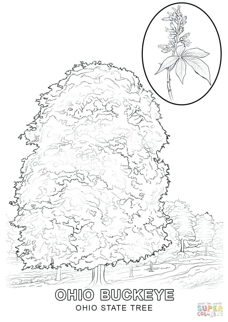 728x1028 Coloring Pages Tree Coloring Pages Of Trees Tree Of Life Mandala