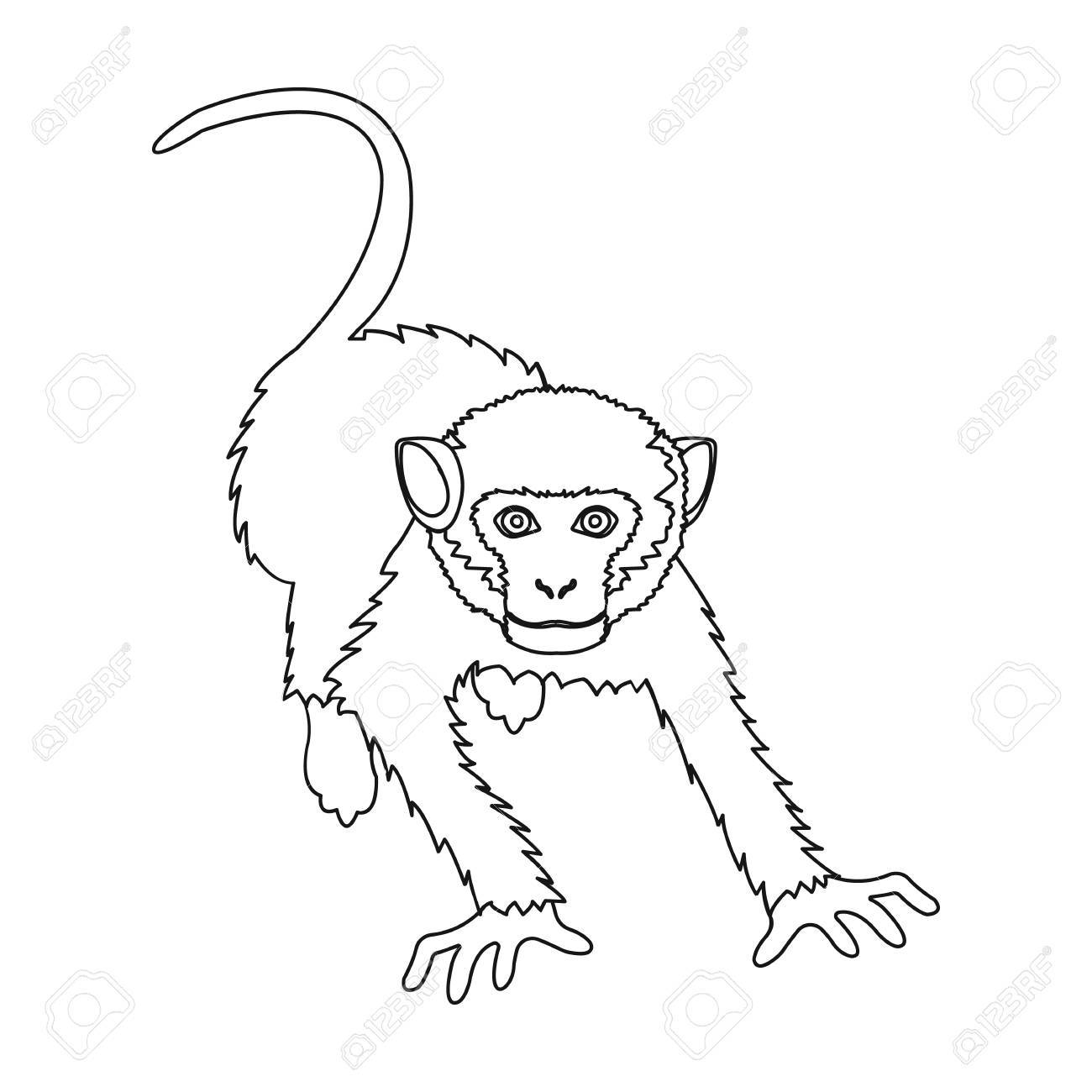 1300x1300 Monkey, Wild Animal Of The Jungle. Monkey, Mammal Primate Single
