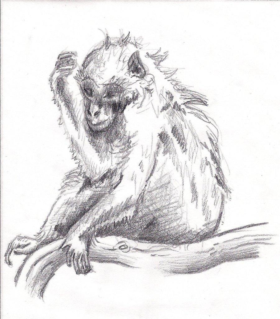 900x1024 Monkey Pencil Drawing Dreaming Monkey Sketchgreat Queen Morrigan