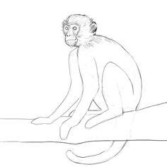 236x236 Drawings Of Monkeys