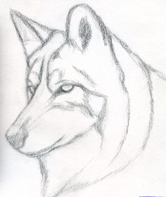 236x281 Wolf Drawing Idea Drawings Drawing Ideas, Wolf
