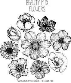 236x275 Cosmos Flowers Flowers Drawings Vector