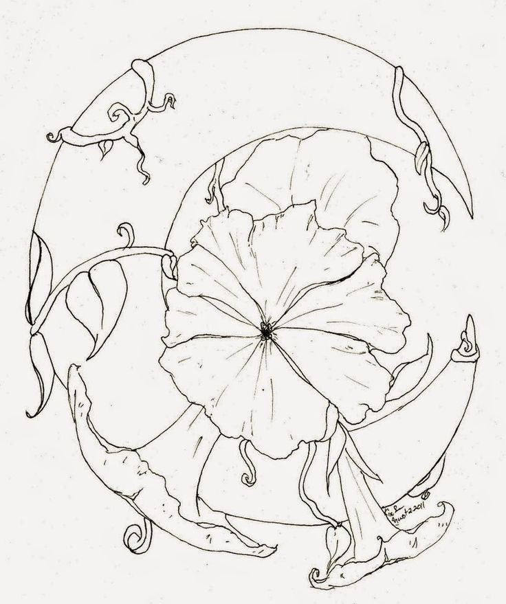 Moon Flower Drawing