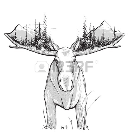 450x450 Moose Illustration. Animal Drawing. The Moose Has White Undercoat