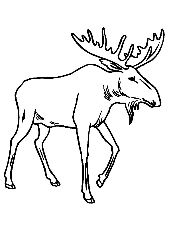 Moose antler drawing at getdrawings free for personal use 600x800 cute moose coloring pages thecheapjerseys Image collections