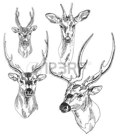 Moose Antlers Drawing
