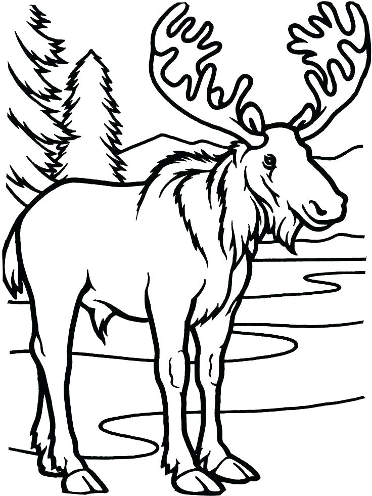 736x981 Elk Coloring Page Moose Coloring Pages Elk Coloring Page Moose