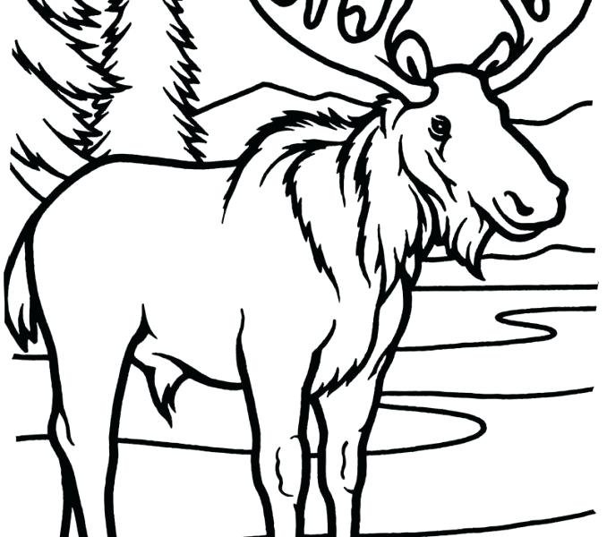 678x600 Moose Coloring Pages New Moose Coloring Pages Moose Coloring Pages