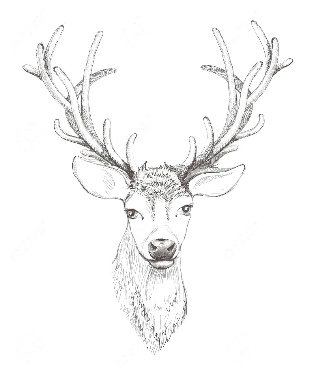 1095x1300 Coloring Pages Surprising Moose Head Outline. Cartoon Moose Head